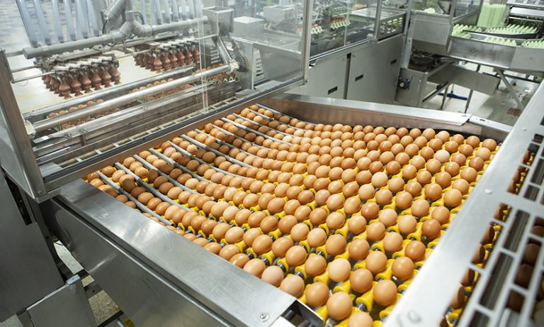 Green Field Foods production 2