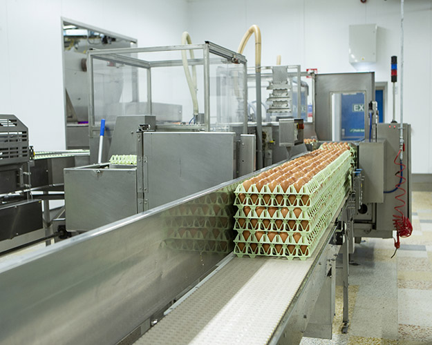 greenfield foods production